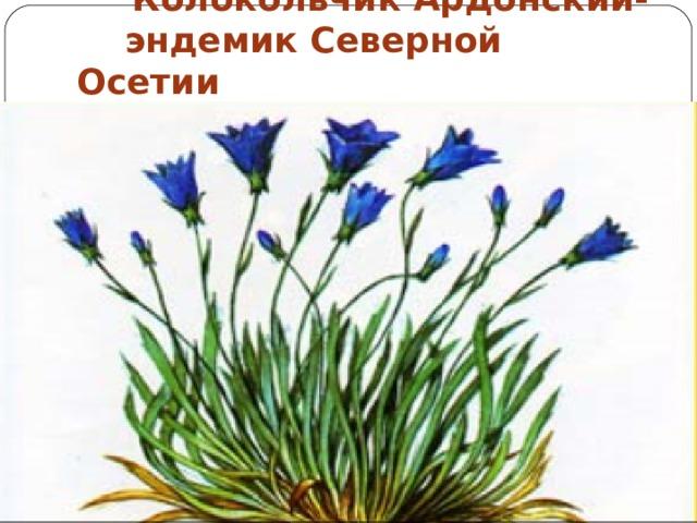 Колокольчик Ардонский-  эндемик Северной Осетии