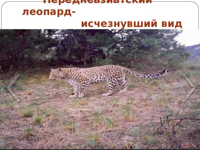 Переднеазиатский леопард-  исчезнувший вид