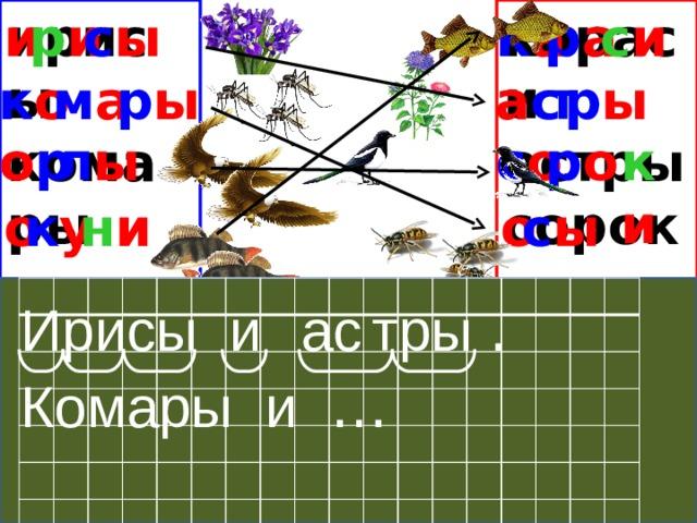 ирисы и с и к а р и с ы р а караси астры комары сороки орлы осы окуни р ы к о м а р ы а с т к и о р р о с о л ы с ы к у о н и о ас тры . Ирисы и Комары и …