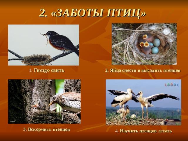 2. «ЗАБОТЫ ПТИЦ» 1 . Гнездо свить 2. Яйца снести и высадить птенцов 3. Вскормить птенцов 4 . Научить птенцов  летать