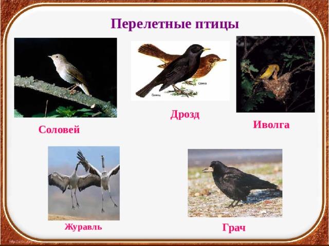 Перелетные птицы Дрозд Иволга Соловей Грач Журавль
