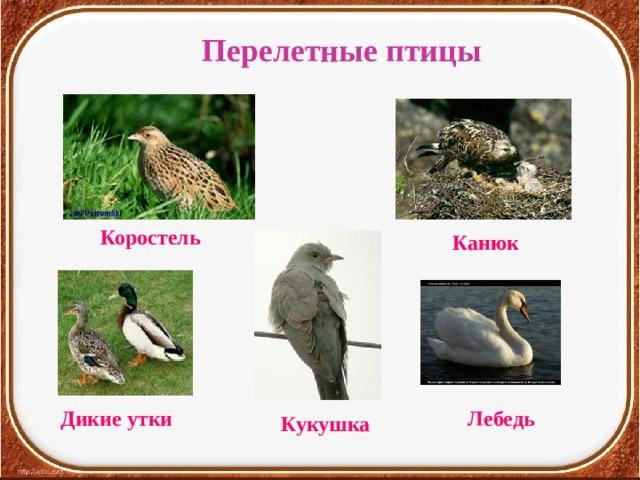 Перелетные птицы Коростель Канюк  Дикие утки Лебедь Кукушка