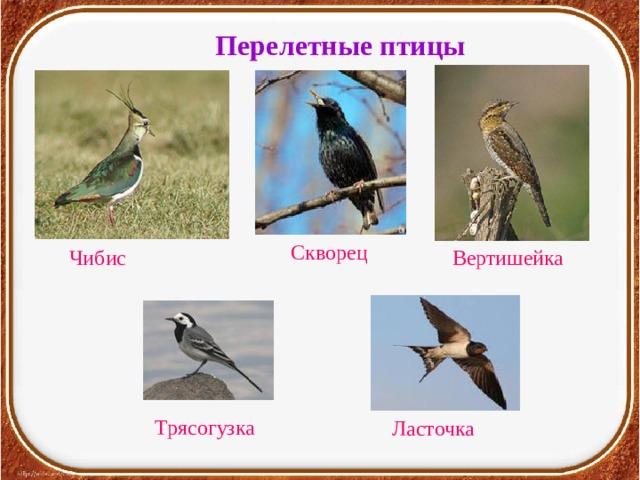 Перелетные птицы Скворец Чибис Вертишейка Трясогузка Ласточка
