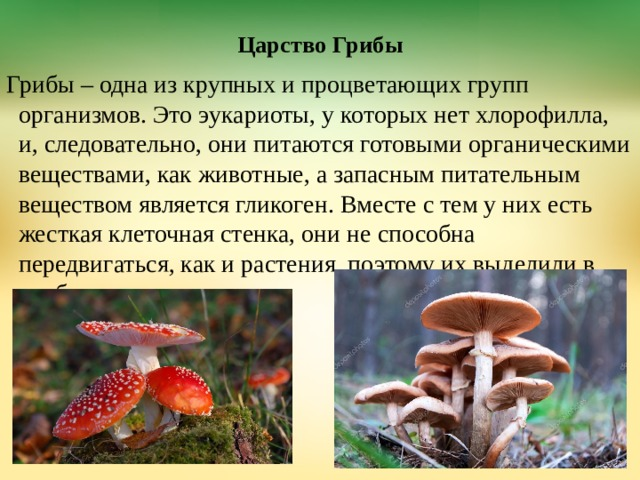 """Презентация """"Грибы"""" - биология, презентации"""