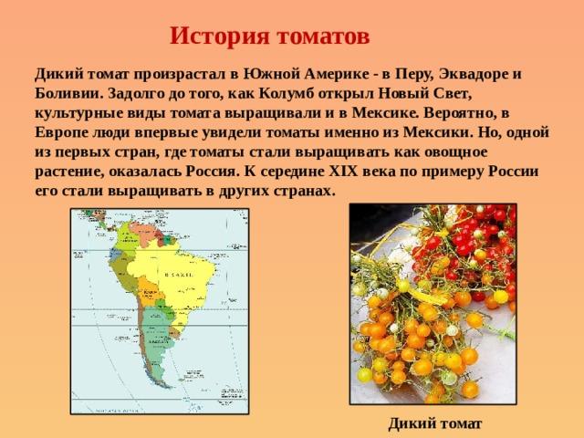 История томатов Дикий томат произрастал в Южной Америке - в Перу, Эквадоре и Боливии. Задолго до того, как Колумб открыл Новый Свет, культурные виды томата выращивали и в Мексике. Вероятно, в Европе люди впервые увидели томаты именно из Мексики. Но, одной из первых стран, гдетоматы стали выращивать как овощное растение, оказалась Россия. К середине XIX века по примеру России его стали выращивать в других странах.   Дикий томат