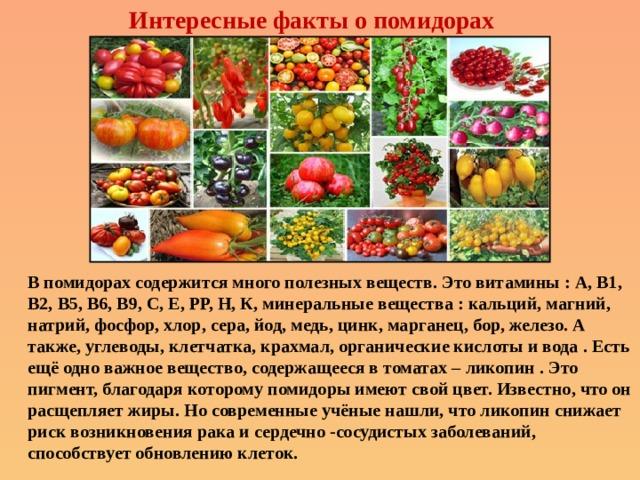 Интересные факты о помидорах В помидорах содержится много полезных веществ. Это витамины : А, В1, В2, В5, В6, В9, С, Е, РР, Н, К, минеральные вещества : кальций, магний, натрий, фосфор, хлор, сера, йод, медь, цинк, марганец, бор, железо. А также, углеводы, клетчатка, крахмал, органические кислоты и вода . Есть ещё одно важное вещество, содержащееся в томатах – ликопин . Это пигмент, благодаря которому помидоры имеют свой цвет. Известно, что он расщепляет жиры. Но современные учёные нашли, что ликопин снижает риск возникновения рака и сердечно -сосудистых заболеваний, способствует обновлению клеток.