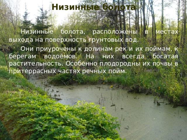 Низинные болота Низинные болота, расположены в местах выхода на поверхность грунтовых вод.   Они приурочены к долинам рек и их поймам, к берегам водоёмов. На них всегда богатая растительность. Особенно плодородны их почвы в притеррасных частях речных пойм.