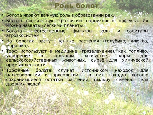 Роль болот