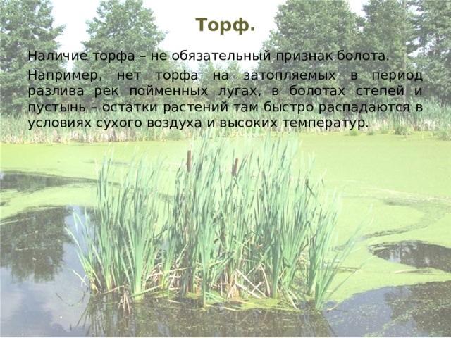 Торф.    Наличие торфа – не обязательный признак болота.    Например, нет торфа на затопляемых в период разлива рек пойменных лугах, в болотах степей и пустынь – остатки растений там быстро распадаются в условиях сухого воздуха и высоких температур.