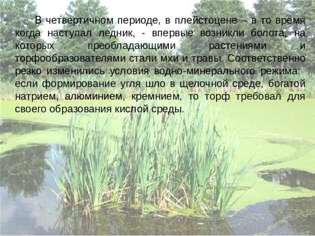 В четвертичном периоде, в плейстоцене – в то время когда наступал ледник, - впервые возникли болота, на которых преобладающими растениями и торфообразователями стали мхи и травы. Соответственно резко изменились условия водно-минерального режима: если формирование угля шло в щелочной среде, богатой натрием, алюминием, кремнием, то торф требовал для своего образования кислой среды.