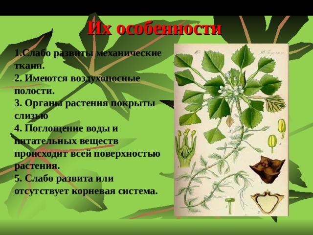 Их особенности 1.Слабо развиты механические ткани. 2. Имеются воздухоносные полости. 3. Органы растения покрыты слизью 4. Поглощение воды и питательных веществ происходит всей поверхностью растения. 5. Слабо развита или отсутствует корневая система.