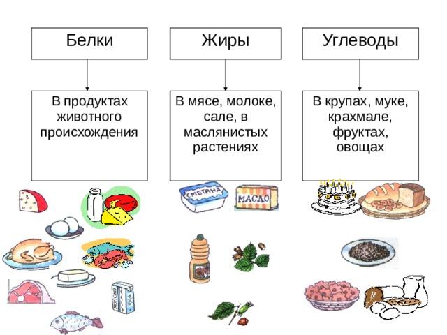 Белки Жиры В продуктах животного происхождения В мясе, молоке, сале, в маслянистых растениях Углеводы В крупах, муке, крахмале, фруктах, овощах