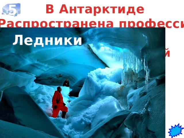 5 В Антарктиде Распространена профессия гляциолог  Ледники Что изучают люди этой профессии?