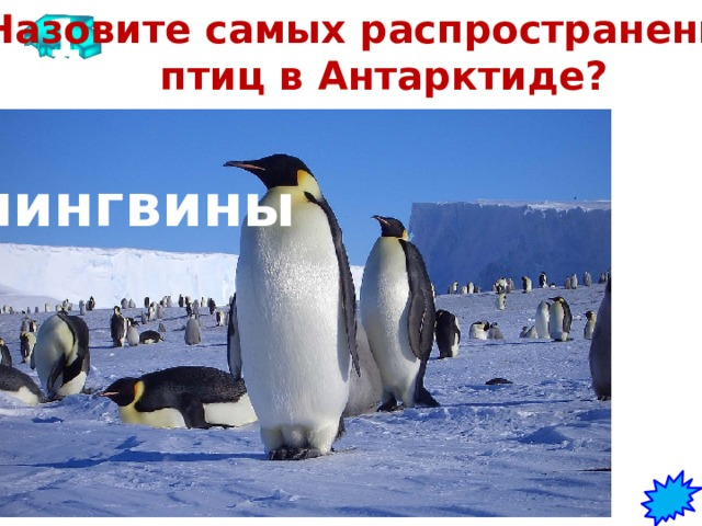 1 Назовите самых распространенных птиц в Антарктиде? пингвины
