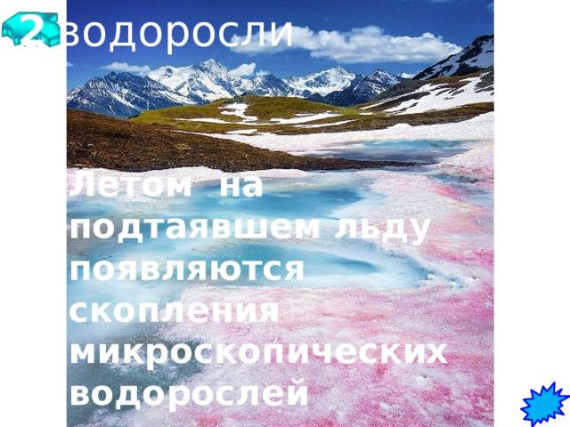 2 Почему только летом на поверхности льда появляются красочные пятна красного, зеленого, желтого цвета?      водоросли Летом на подтаявшем льду появляются скопления микроскопических водорослей красного, зеленого и желтого цвета