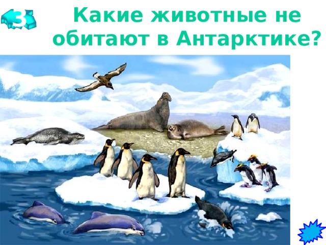 3 Какие животные не обитают в Антарктике?   Киты, тюлени, овцебыки, пингвины, поморники, белые медведи, бакланы, буревестники.