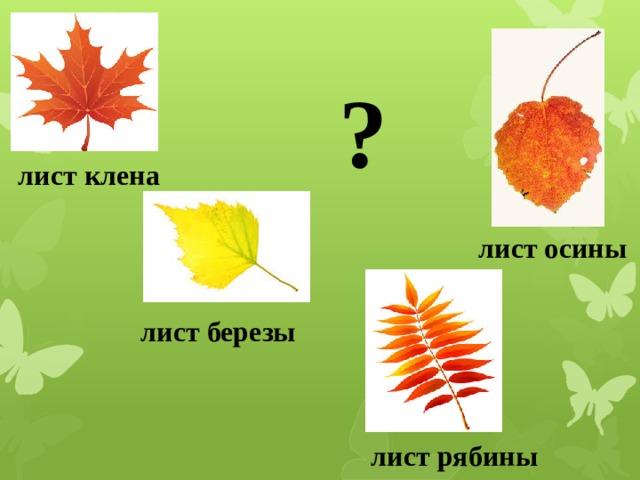 ? лист клена лист осины 1.Лист клена. 2. лист осины 3.лист березы 4.лист рябины. С каких деревьев опали листья? лист березы лист рябины