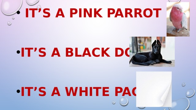 It's a pink parrot  It's a black dog  It's a white page
