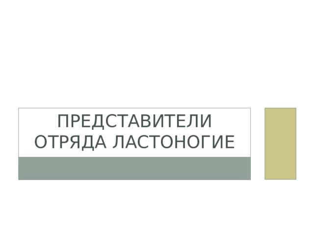 Представители отряда Ластоногие