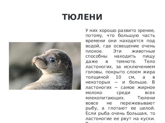 Тюлени У них хорошо развито зрение, потому, что большую часть времени они находятся под водой, где освещение очень плохое. Эти животные способны находить пищу даже в темноте. Тело ластоногих, за исключением головы, покрыто слоем жира толщиной 10 см, а в некоторых − и больше. В ластоногих − самое жирное молоко среди всех млекопитающих. Тюлени вовсе не пережевывают рыбу, а глотают ее целой. Если рыба очень большая, то ластоногие ее рвут на куски. Тюлени выдерживают температуру до -80С°.