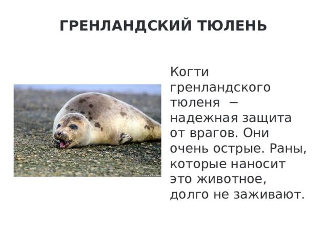 Гренландский тюлень   Когти гренландского тюленя − надежная защита от врагов. Они очень острые. Раны, которые наносит это животное, долго не заживают.