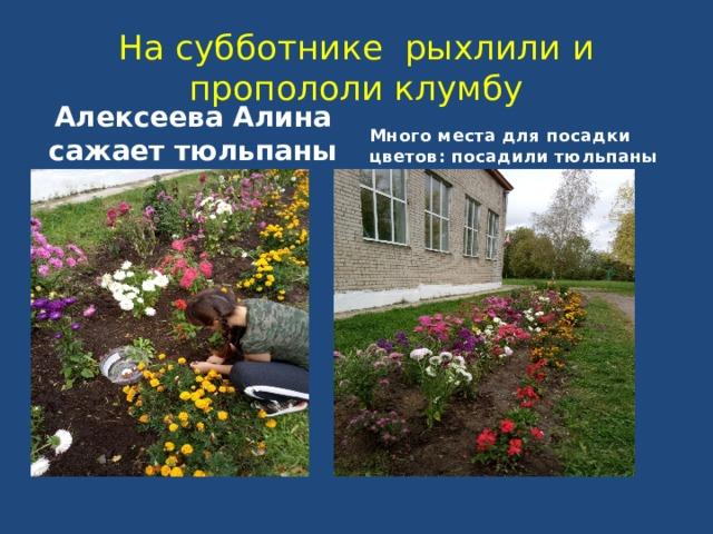На субботнике рыхлили и пропололи клумбу Алексеева Алина сажает тюльпаны Много места для посадки цветов: посадили тюльпаны
