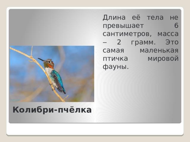 Длина её тела не превышает 6 сантиметров, масса ‒ 2 грамм. Это самая маленькая птичка мировой фауны. Колибри-пчёлка