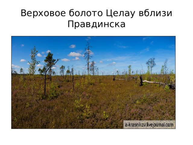 Верховое болото Целау вблизи Правдинска