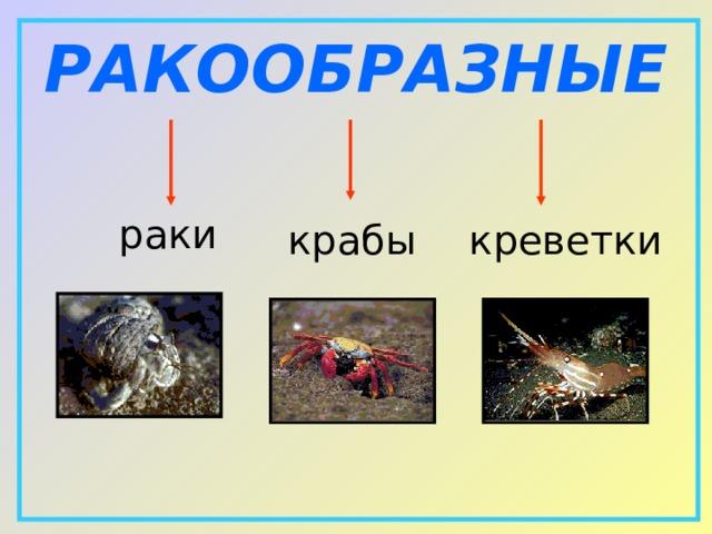 РАКООБРАЗНЫЕ  раки   крабы  креветки