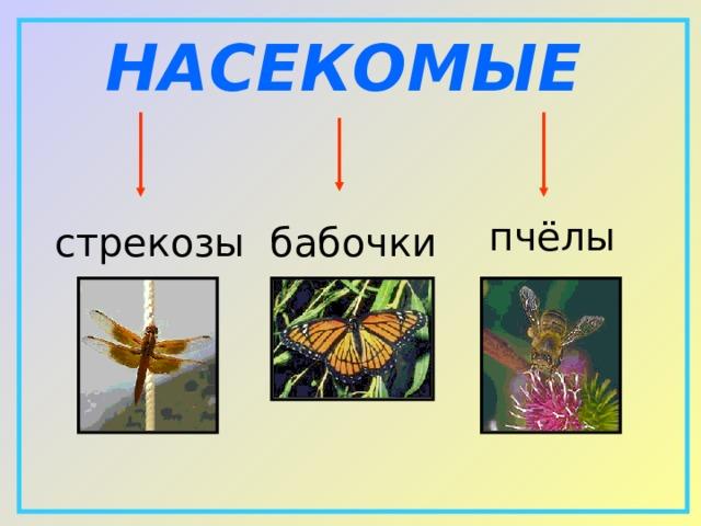 НАСЕКОМЫЕ  пчёлы  бабочки  стрекозы