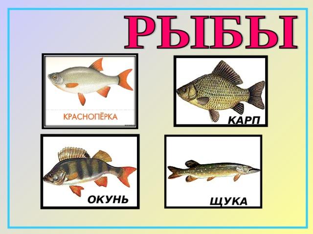 КАРП ОКУНЬ ЩУКА
