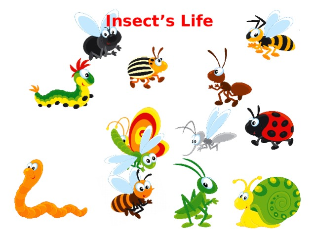 Insect's Life