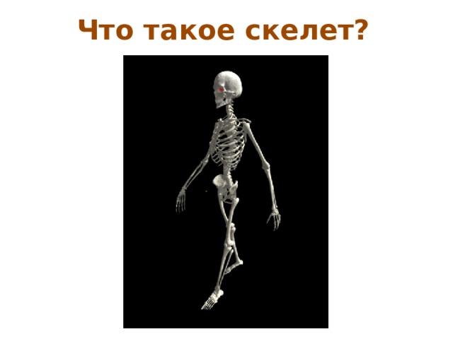 Что такое скелет?