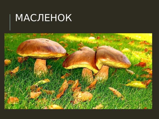 МАСЛЕНОК