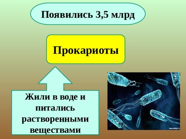 Появились 3,5 млрд Прокариоты Жили в воде и питались растворенными веществами