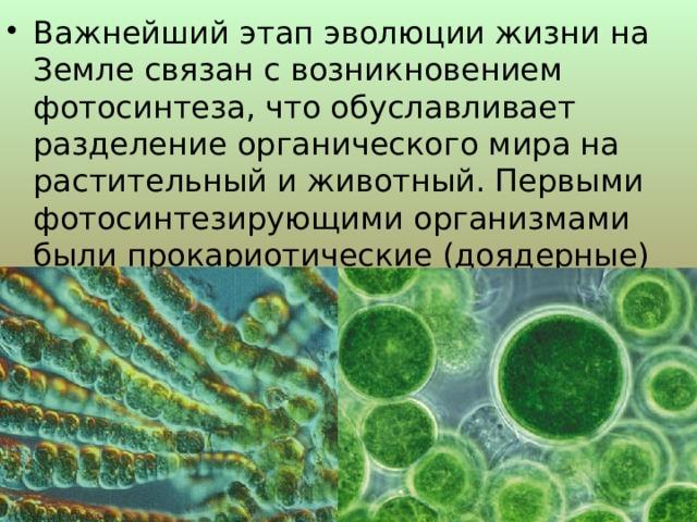 Важнейший этап эволюции жизни на Земле связан с возникновением фотосинтеза, что обуславливает разделение органического мира на растительный и животный. Первыми фотосинтезирующими организмами были прокариотические (доядерные) цианобактерии и сине-зеленые водоросли .