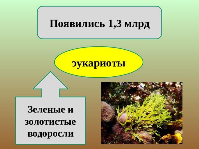 Появились 1,3 млрд эукариоты Зеленые и золотистые водоросли
