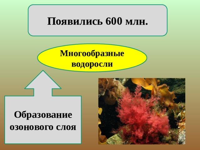 Появились 600 млн. Многообразные водоросли Образование озонового слоя