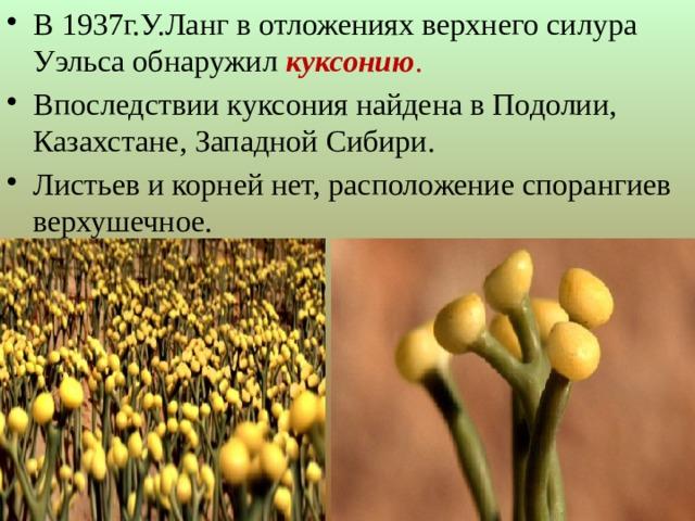 В 1937г.У.Ланг в отложениях верхнего силура Уэльса обнаружил куксонию . Впоследствии куксония найдена в Подолии, Казахстане, Западной Сибири. Листьев и корней нет, расположение спорангиев верхушечное.