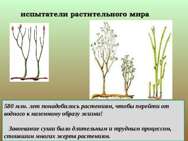 испытатели растительного мира 580млн. лет понадобилось растениям, чтобы перейти от водного к наземному образу жизни!   Завоевание суши было длительным и трудным процессом, стоившим многих жертв растениям.