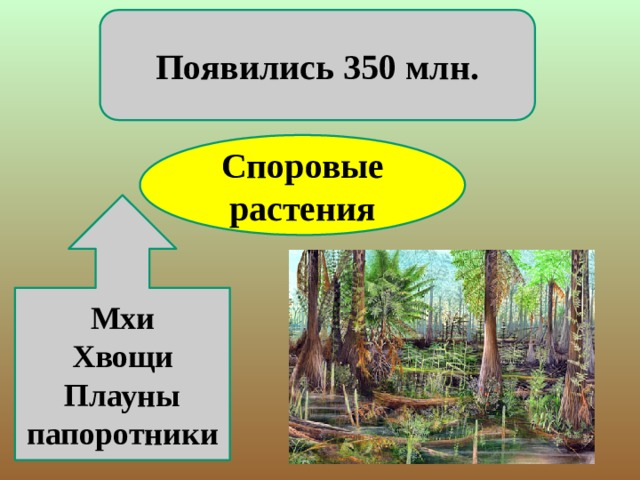 Появились 350 млн. Споровые растения Мхи Хвощи Плауны папоротники