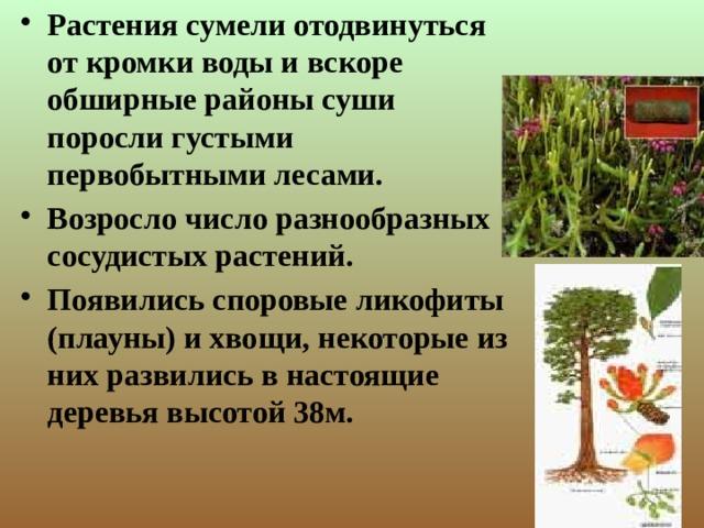 Растения сумели отодвинуться от кромки воды и вскоре обширные районы суши поросли густыми первобытными лесами. Возросло число разнообразных сосудистых растений. Появились споровые ликофиты (плауны) и хвощи, некоторые из них развились в настоящие деревья высотой 38м.