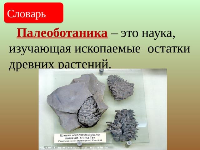 Палеоботаника – это наука, изучающая ископаемые остатки древних растений. Словарь