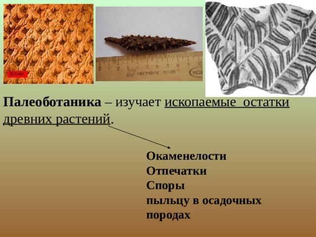 Палеоботаника – изучает ископаемые остатки древних растений . Окаменелости Отпечатки Споры пыльцу в осадочных породах