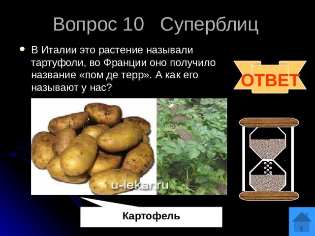 Вопрос 10 Суперблиц В Италии это растение называли тартуфоли, во Франции оно получило название «пом де терр». А как его называют у нас?  ОТВЕТ Картофель