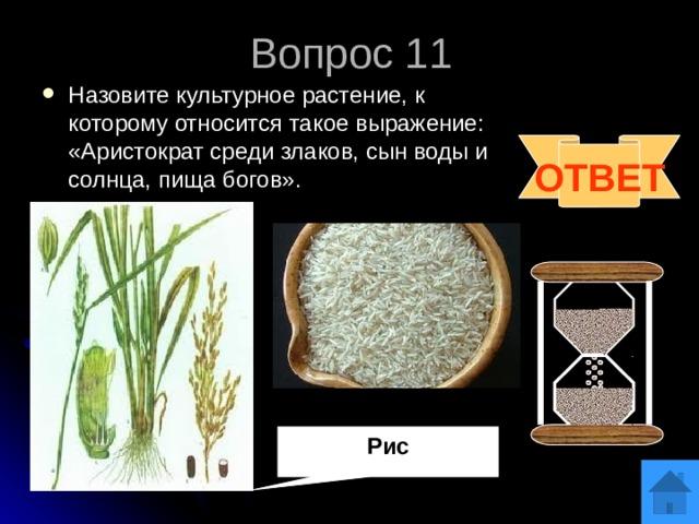 Рис Вопрос 11 Назовите культурное растение, к которому относится такое выражение: «Аристократ среди злаков, сын воды и солнца, пища богов».  ОТВЕТ