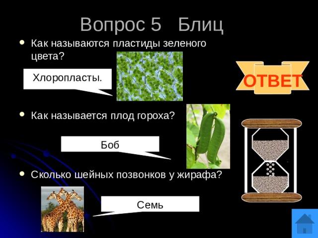Вопрос 5 Блиц Как называются пластиды зеленого цвета? Как называется плод гороха? Сколько шейных позвонков у жирафа? ОТВЕТ Хлоропласты. Боб Семь