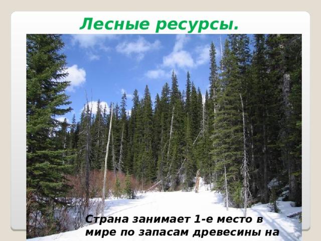 Лесные ресурсы.  Страна занимает 1-е место в мире по запасам древесины на душу населения .