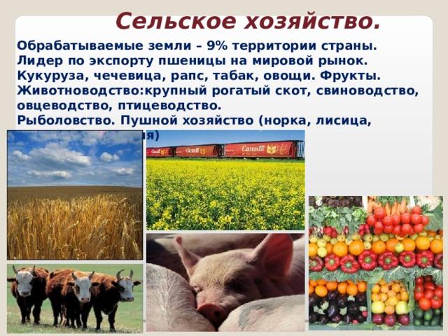 Сельское хозяйство. Обрабатываемые земли – 9% территории страны. Лидер по экспорту пшеницы на мировой рынок. Кукуруза, чечевица, рапс, табак, овощи. Фрукты. Животноводство : крупный рогатый скот, свиноводство, овцеводство, птицеводство. Рыболовство. Пушной хозяйство (норка, лисица, шиншилла, нутрия)