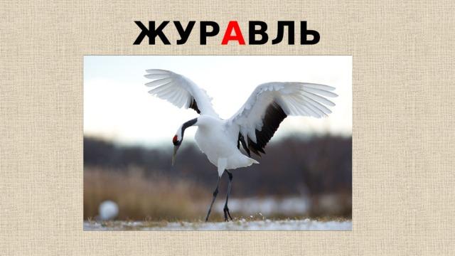 ЖУР А ВЛЬ